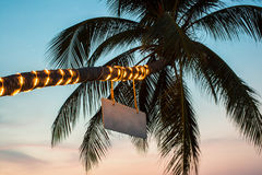 Palm with flashlights on the beach. Stock Photos