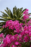 Palm and flowers. A palm with beautiful Flowers in the artist village, Sidi Bou Said in Tunisia stock images