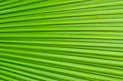 Palm Foliage line background Stock Images