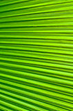 Palm Foliage line background Royalty Free Stock Photo