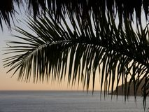Palm frond hangs over ocean scene during late afternoon. A lone palm fond hangs over the horizon framing the ocean and late afternoon sunlight over a Mexican Royalty Free Stock Images