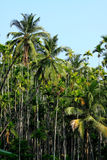 Palm forest Stock Image