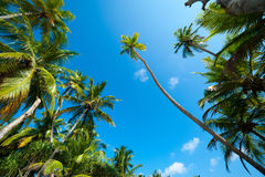 Palm forest Stock Photo