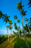 Palm forest Royalty Free Stock Image
