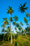 Palm forest Royalty Free Stock Photo