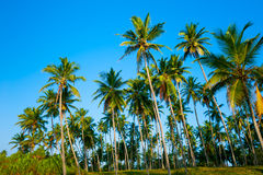 Palm forest Stock Photos