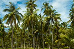 Palm forest. Stock Photos