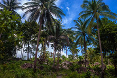 Palm forest Royalty Free Stock Images