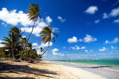 Palm forest on caribbean beach. With blue sky Stock Images