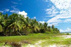 Palm forest on caribbean sea with blue sky Royalty Free Stock Images