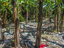 The palm forest is covered with waste, plastic bags, garbage Stock Photos