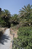 Palm forest in Crete Royalty Free Stock Photos