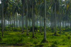 Palm forest Stock Photography