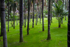Palm forest in Loro Park Royalty Free Stock Photos