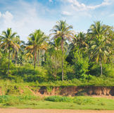 Palm forest on the river bank Royalty Free Stock Photo