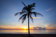 Palm forest silhouettes Stock Photos