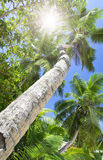 Palm forest. Sun light through treetops. Stock Photography