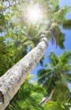 Palm forest. Sun light through treetops. Stock Photography