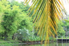 Palm forest topical rainforest. In Thailand Royalty Free Stock Image