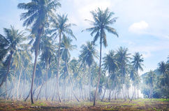 Palm forest on tropical island in Thailand Royalty Free Stock Photo