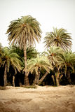 Palm forest at Vai Stock Images
