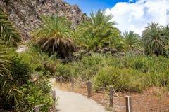 Palm forest walk near Preveli beach in Crete Stock Photos