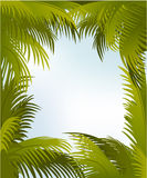 Palm frame Royalty Free Stock Photo