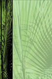 Palm frame paper. Frame created with  palm foliage for paper page Royalty Free Stock Photo