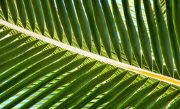 Palm Fron Abstract. Layering of palm frons creates crossing lines in an abstract patter royalty free stock photos