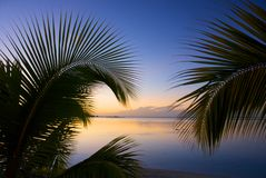 Palm frond 2 Royalty Free Stock Images