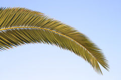 Palm frond Royalty Free Stock Photos