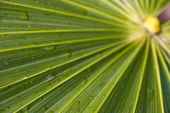 Palm frond 3 Stock Image