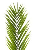 Palm Frond Stock Images