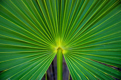 Free Palm Frond Royalty Free Stock Photography - 70218057