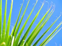 Palm Frond. A palm frond bathed in the midday sun Stock Images