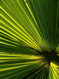 Palm Frond Abstract Royalty Free Stock Images