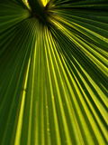 Palm Frond Abstract Royalty Free Stock Photo