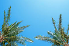Palm frond against blue sky Stock Photography