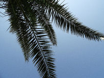Palm frond against blue sky Royalty Free Stock Image
