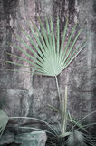 Palm Frond Against Rock Royalty Free Stock Photography