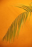 Palm frond against a textured orange wall Royalty Free Stock Photo
