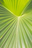 Palm Frond. Close Up of a Palm Frond Stock Image
