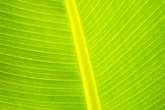 Palm frond close up Stock Photos