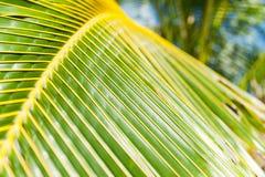 Palm frond closeup. Royalty Free Stock Photos