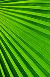Palm Frond Stock Photos