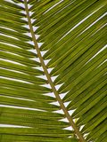 Palm, Frond, Leaf, Exotic Stock Photo