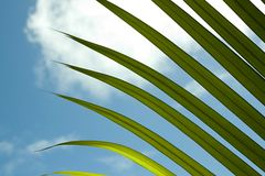 Palm frond leaf with sky Stock Photography