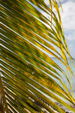Palm Frond on Ocean Stock Photos