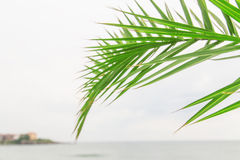 Palm frond Sea. Green palm frond blue Sea Royalty Free Stock Photos