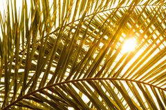 Palm frond with shade and sun Stock Image